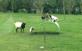 Amazing Animal Comedy Video