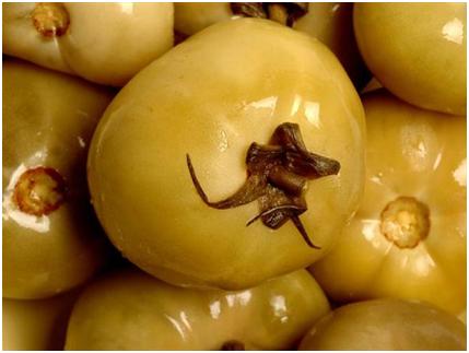 Yaşıl Pomidor Turşusu